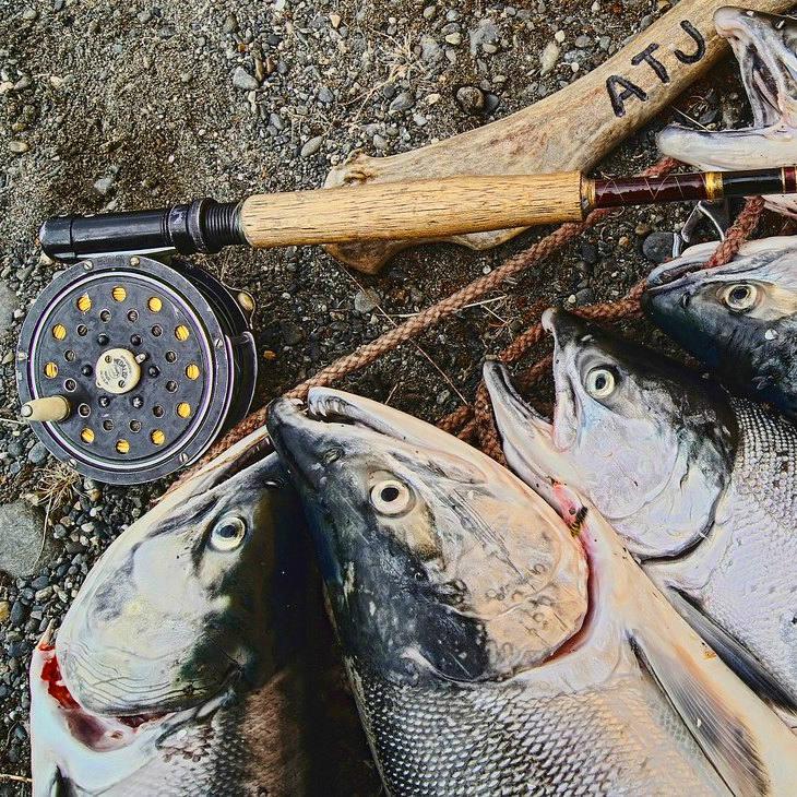 Frisch gefangene Lachse