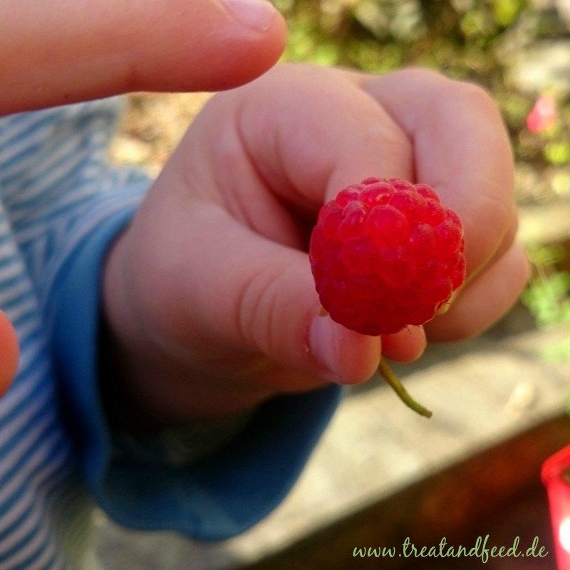 Himbeere in einer Kinderhand.